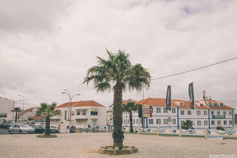 palm tree bodyboard holidays surfing photography